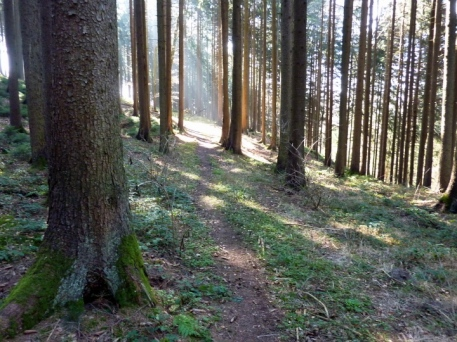 Trail durchs Erlauholz