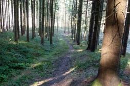 Trail im Erlauholz
