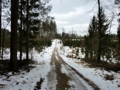 Im schattigen Wald hält sich hartnäckig eine Melange aus komprimiertem Altschnee und Blankeis